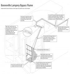 Features of the Bonneville Dam lamprey bypass system