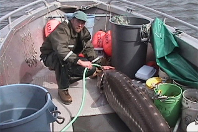 Develop a Master Plan for a Sturgeon Restoration Facility