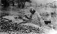 A Nez Perce woman peeling camas bulbs