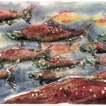 salmon_watercolor-small