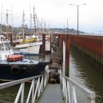Sea lions crowd a walkway at a mooring basin in Astoria. Photo courtesy Northwest Power and Conservation Council.