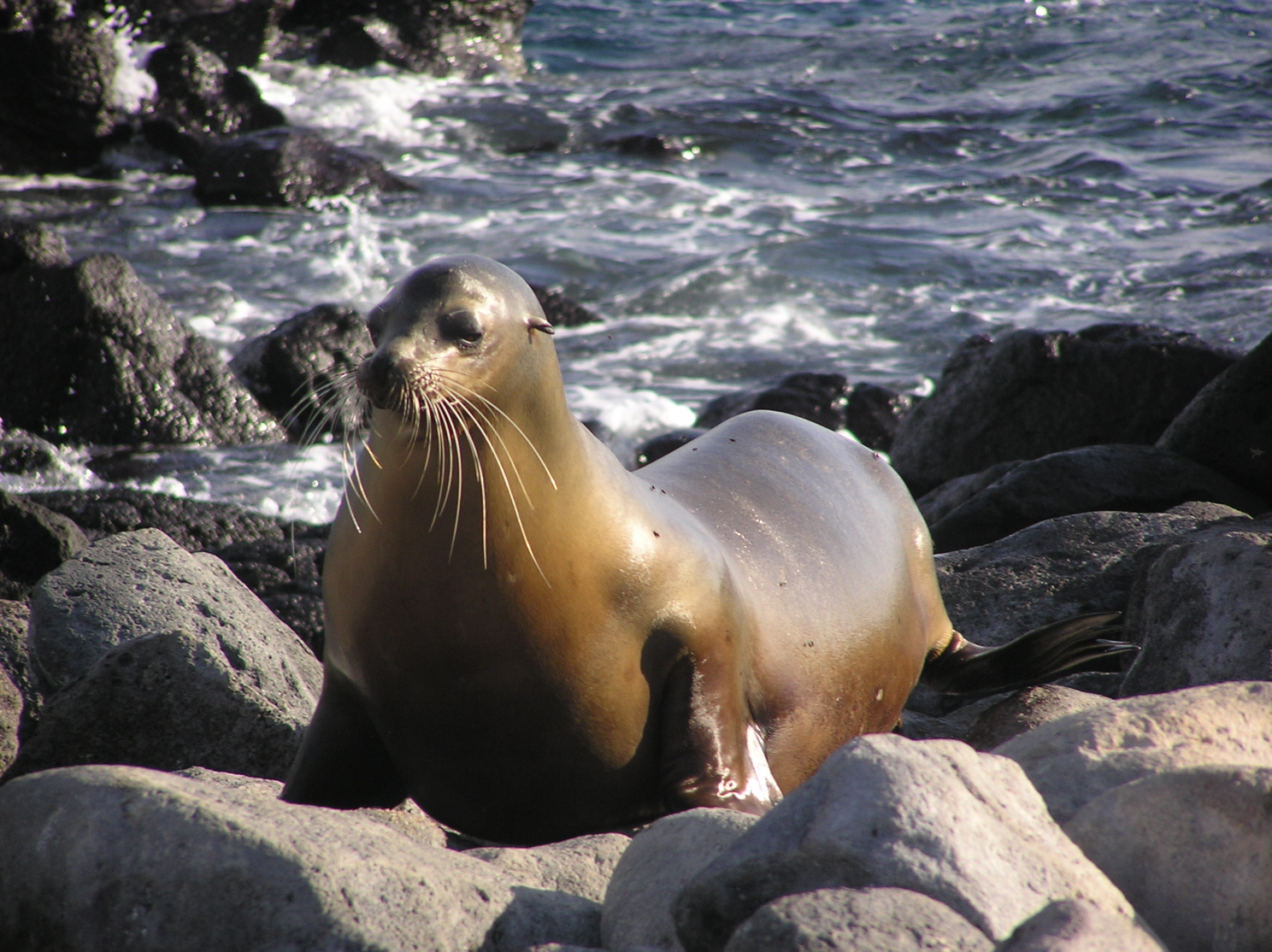 Columbia River Sea Lions - CRITFC