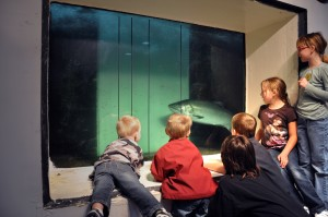A group of children watches a fall chinook swim past the north shore fish window at McNary Dam. Photo courtesy U.S. Army Corps of Engineers, Walla Walla District.